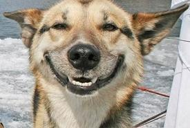 Picture of Happy Dog