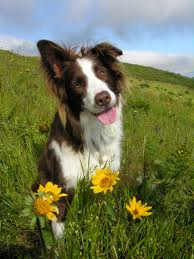 picture of dog in field